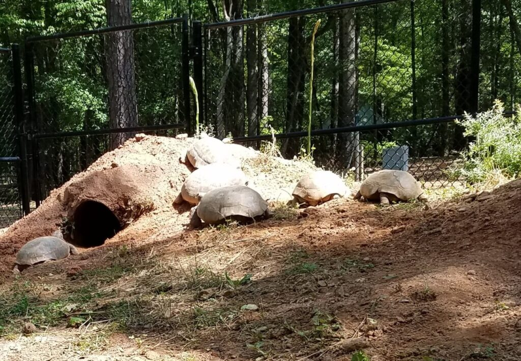 gopher tortoise exhibit